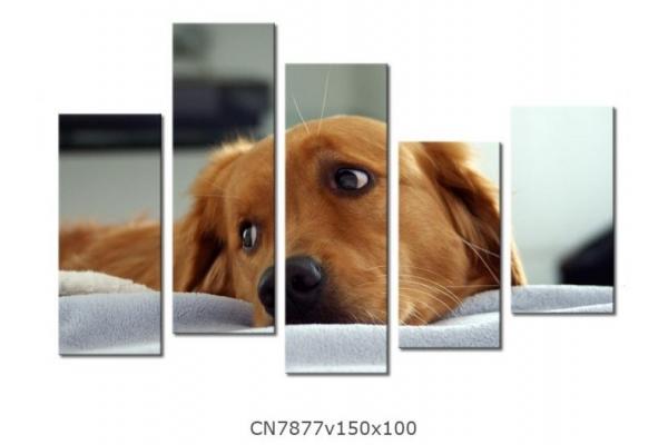 Obraz Pes