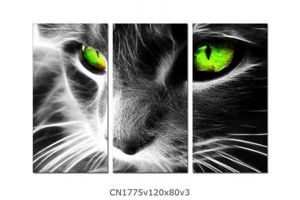 Obraz Kočička